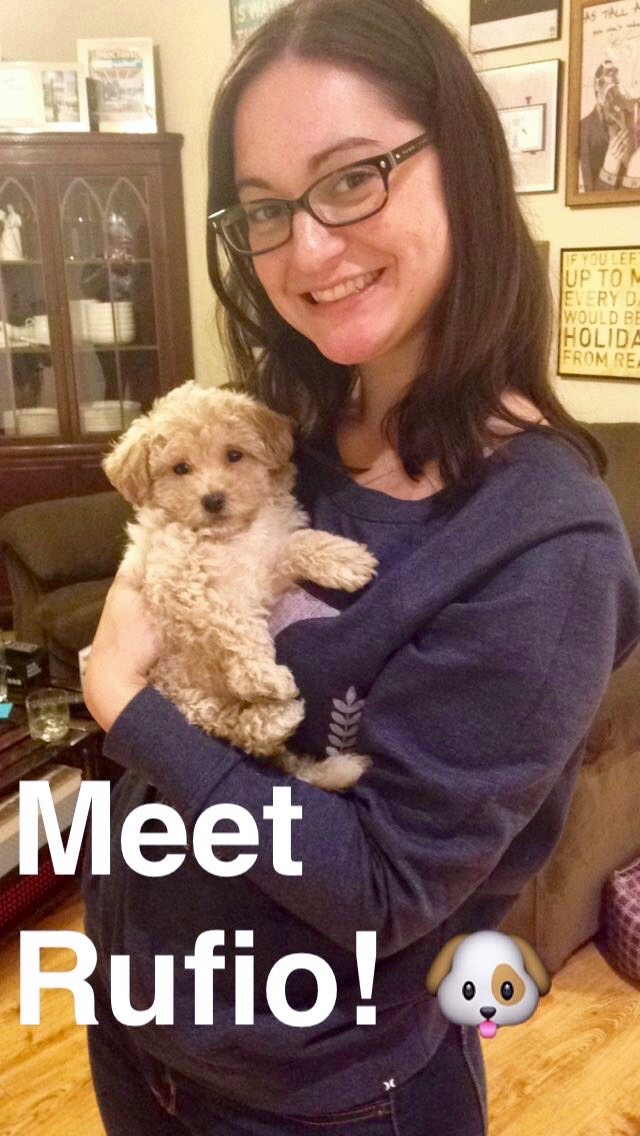 Our new bichpoo